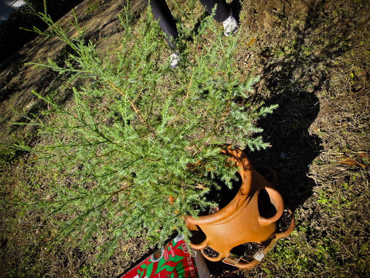 Thanksgiving Day Tree Planting