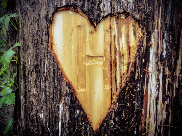 Heart carved tree at Vail Point park