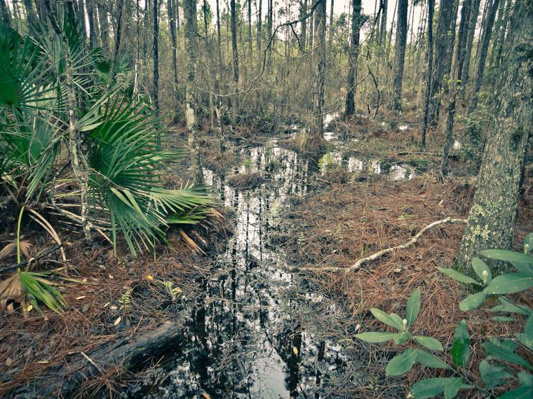 Treaty Park Swamp