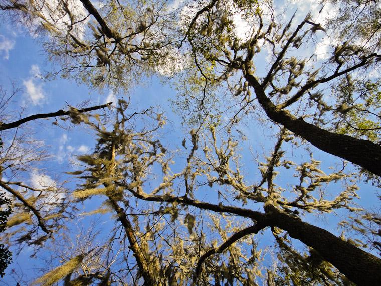 Spanish Moss Sky Vail Point Park