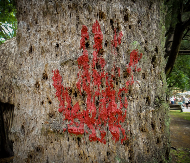 Fountain of youth indian red hand paint on palm tree