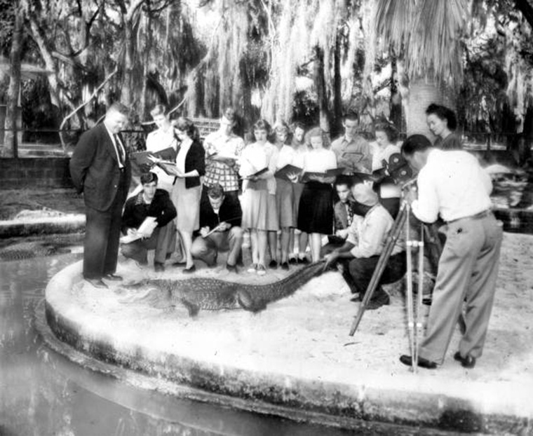 Alligator farm video shoot in 1940s