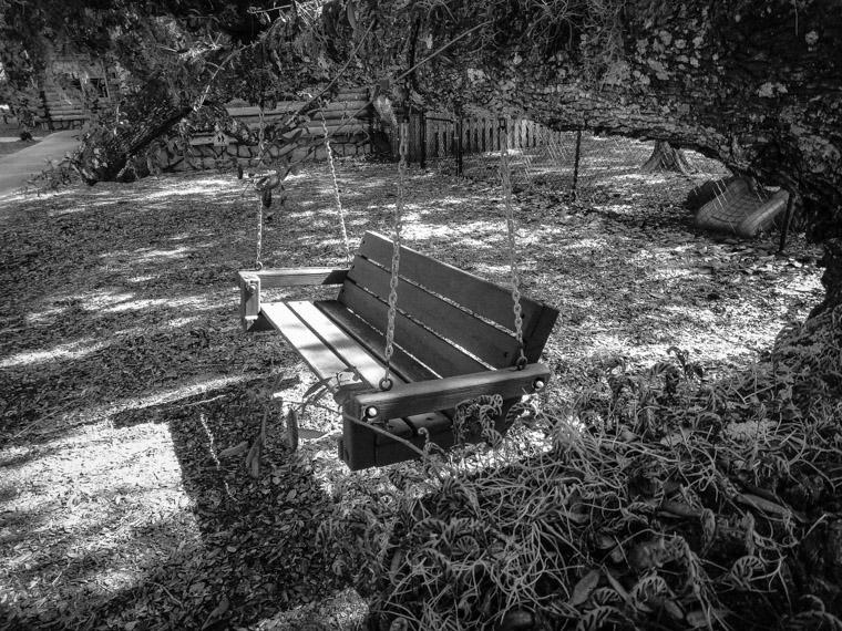 Live oak swing