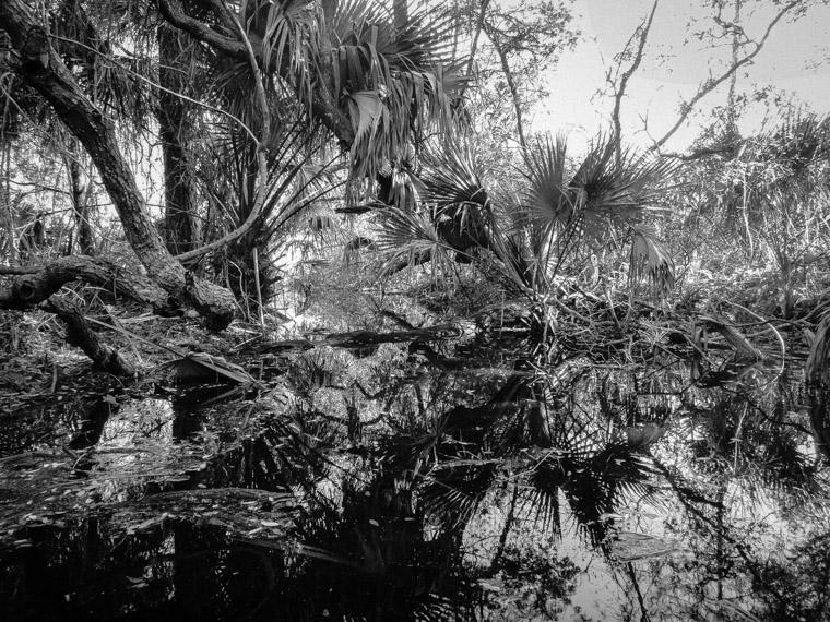 Anastasia State Park Swamp Marsh