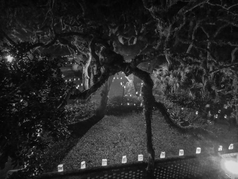 Lighthouse live oak tree