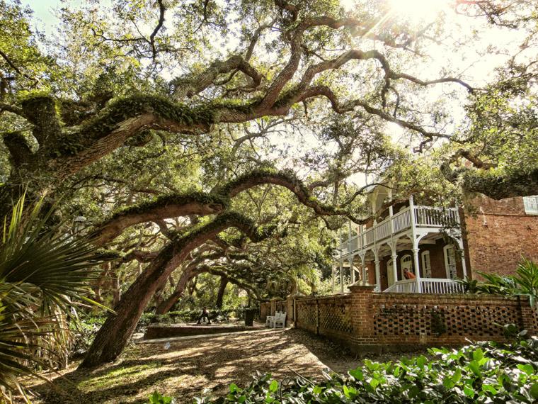 Lighthouse keeper's house live oaks