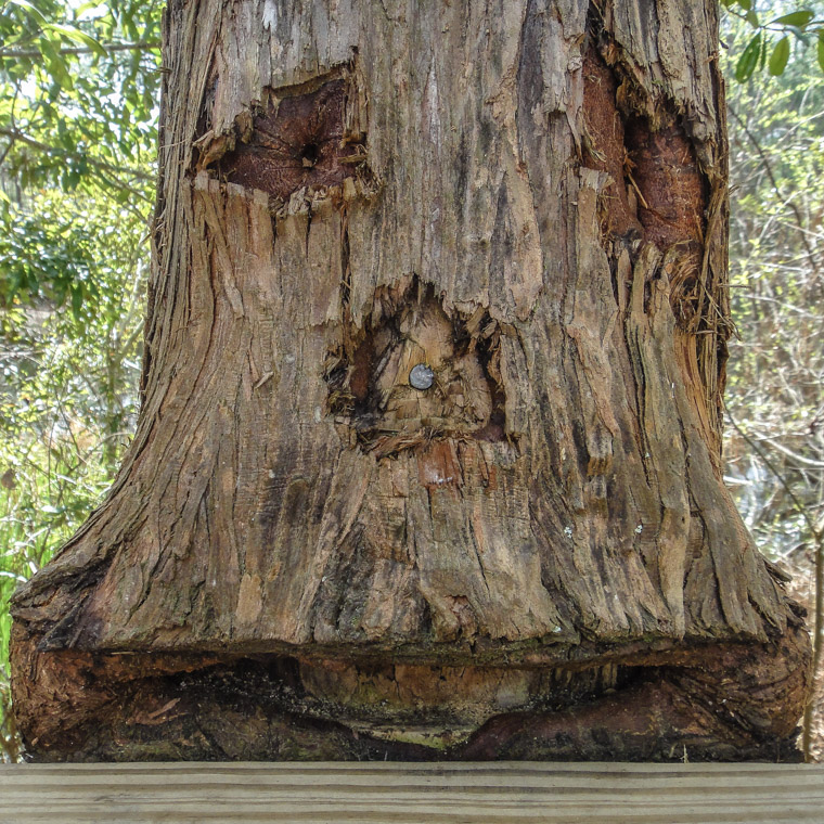 Groot Treebeard Tree Treaty Park