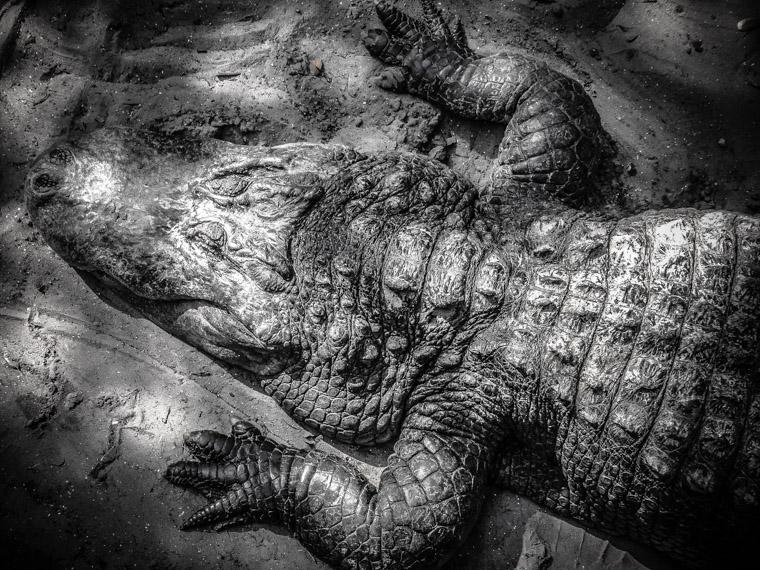 Alligator farm shade