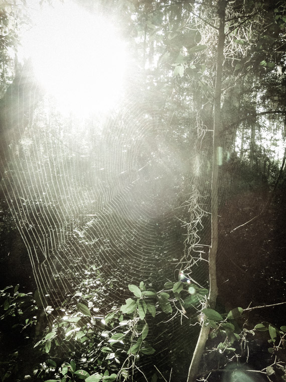 Spider web on trail