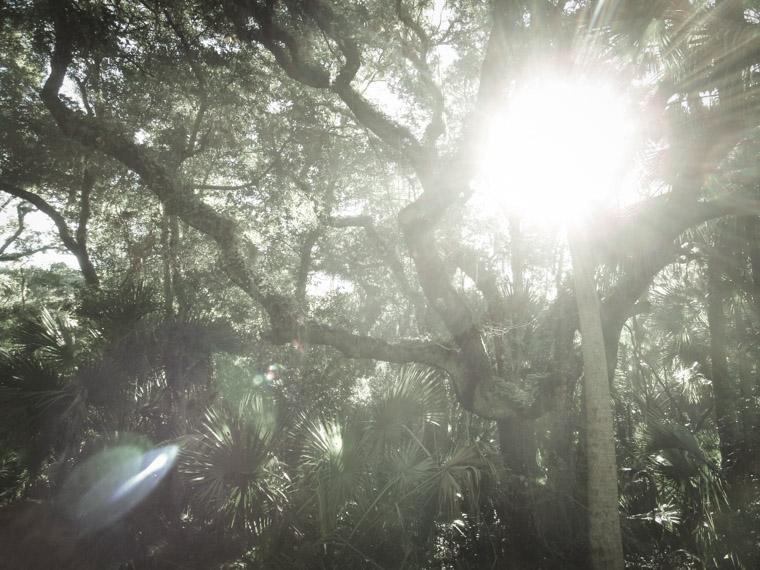 Washington Oaks State Park Sunshine