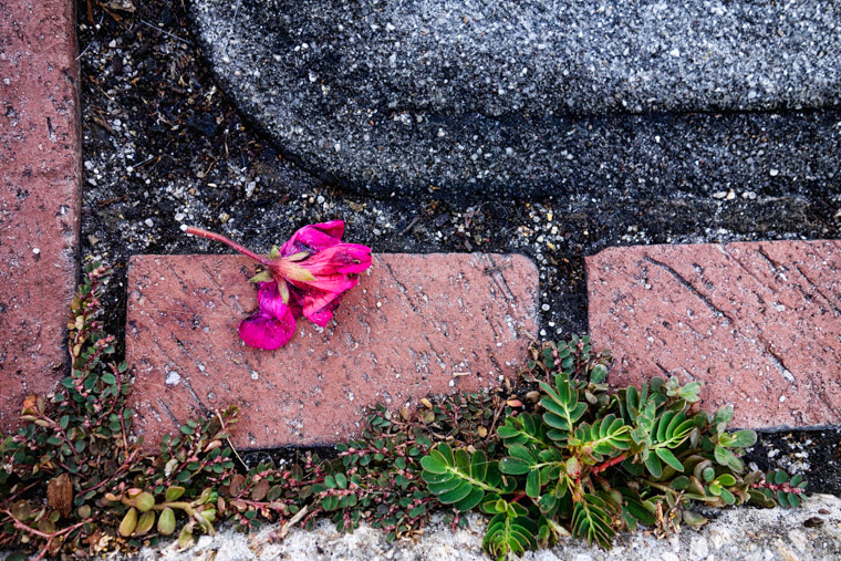 Brick pavement flower