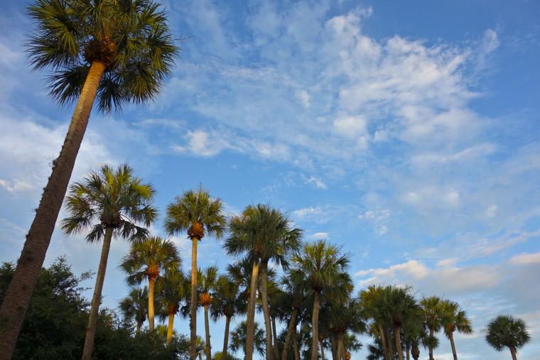Flagler College palm garden skyline