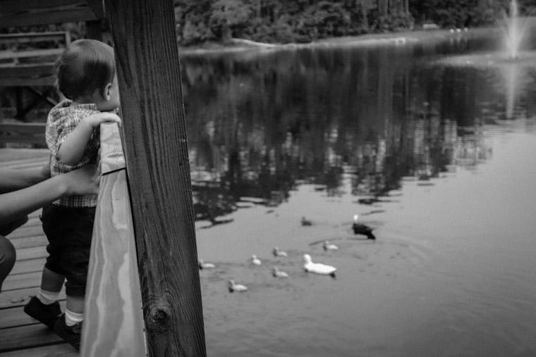 Treaty park duck pond boardwalk