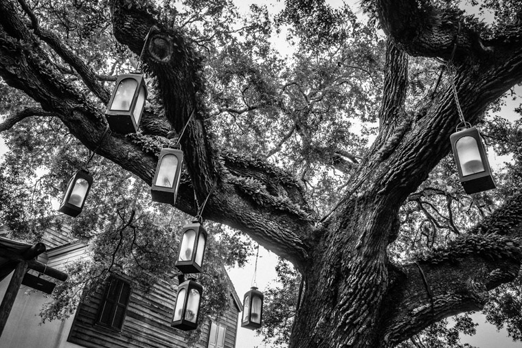 Spanish Quarter Live Oak Tree Lights