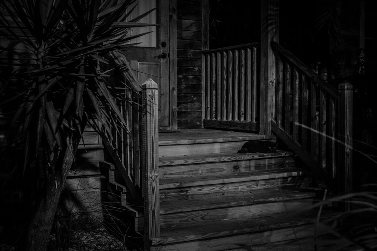 black Cat on porch steps at night