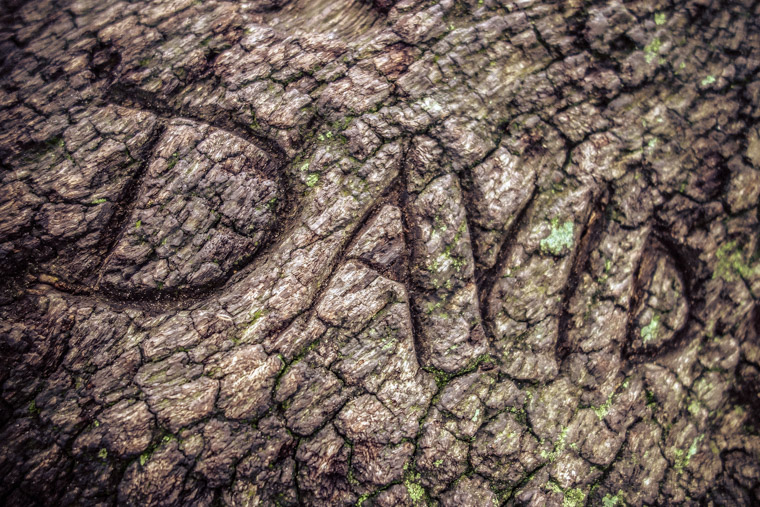 The name david carved into tree at pope road park