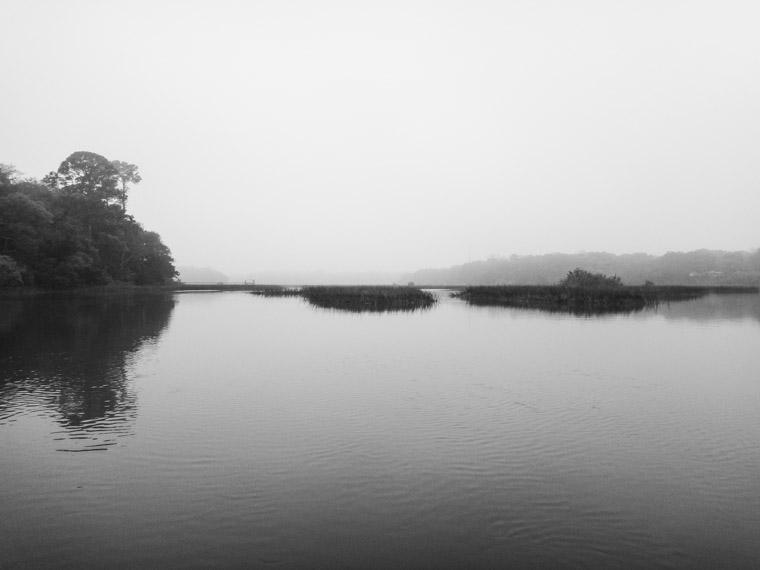 Moultrie Creek Fog