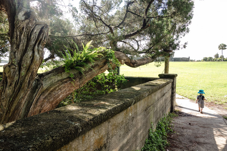 Live Oak Coquina Wall at Fort with James
