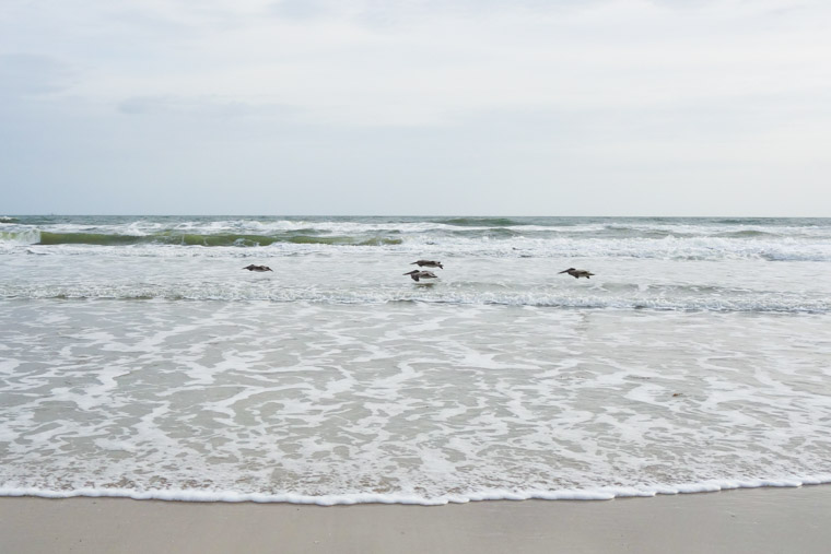 Four pelicans flying low over waves