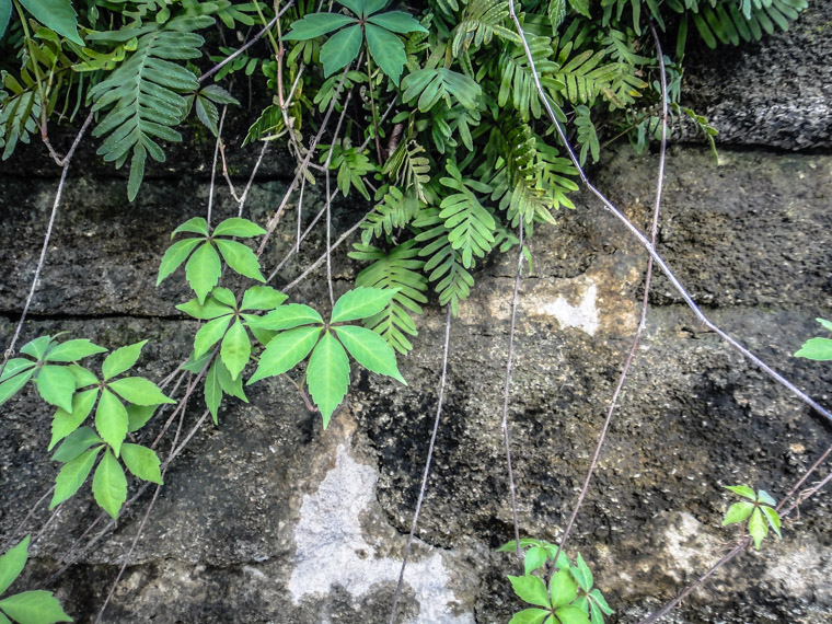 Plants growing over stone wall