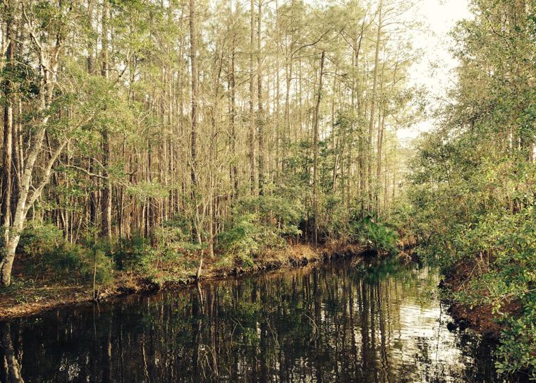 Treaty park stream and trees