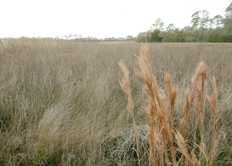 Faver Dykes Marsh Field