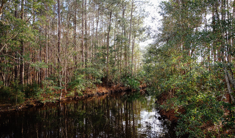 Treaty Park creek trees