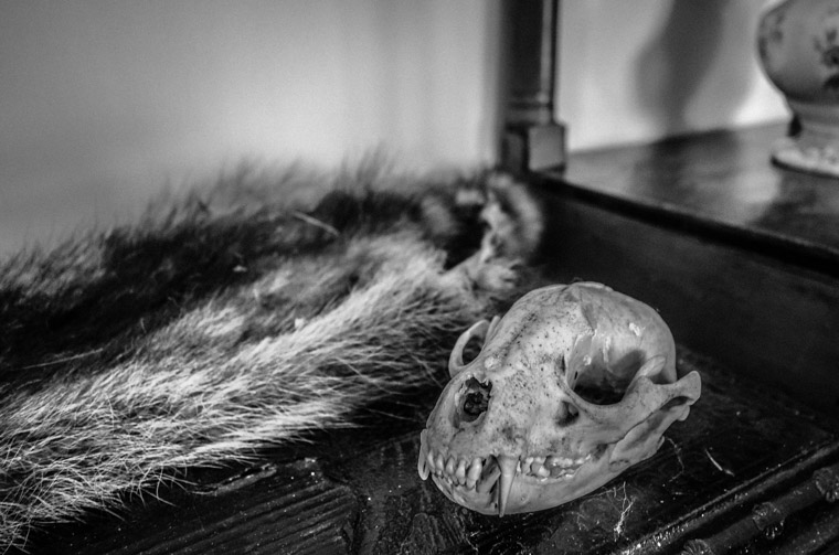 Ximenez-Fatio House animal taxidermy skull fur