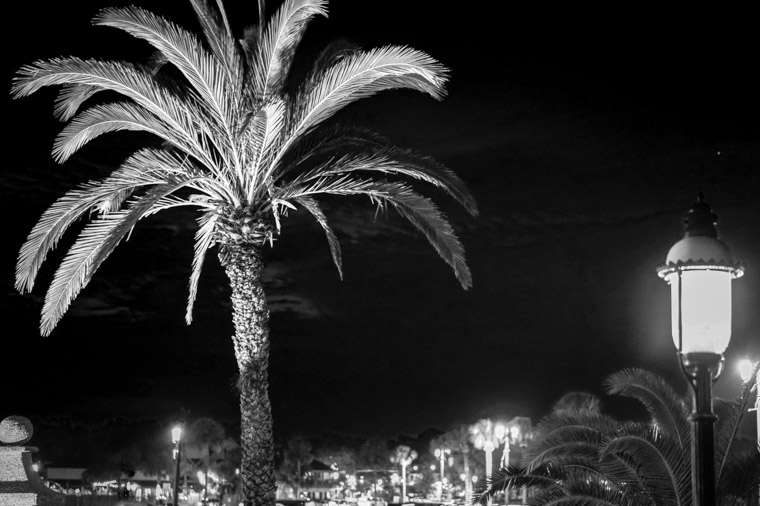 Palm tree and lightpost